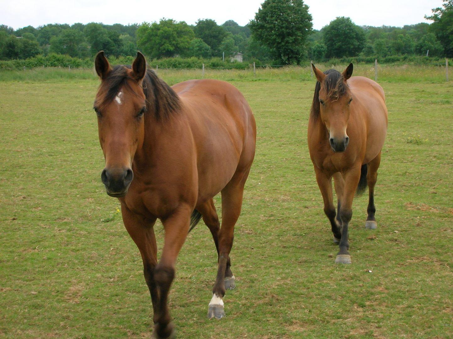 Galeria de fotos e imagens Quarto de Milha ~ Wallpaper Cavalos Quarto De Milha